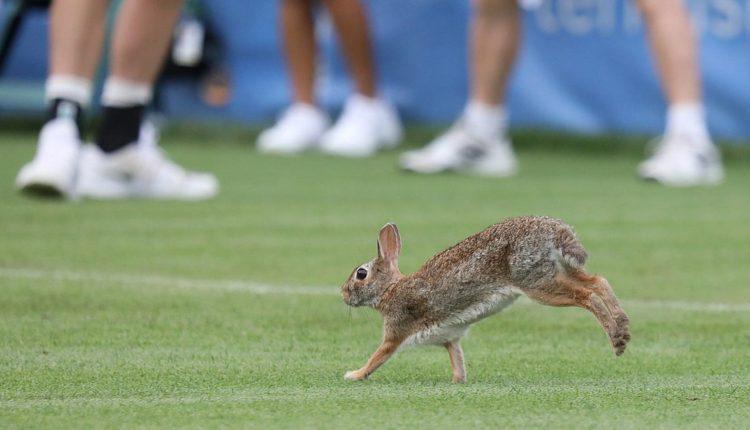 70b13fa8-9fe9-4ea0-addb-f1a203269893-rabbit_tennis.jpg